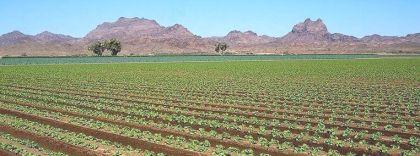 Farm 1-x